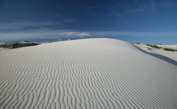 Sand dune Hoop reserve