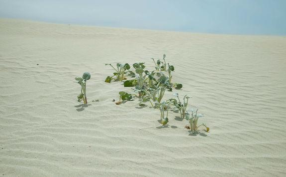 Leaves dunes De Hoop reserve