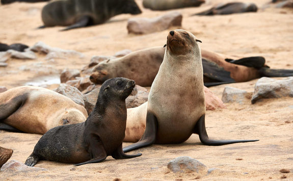 Seals south africa