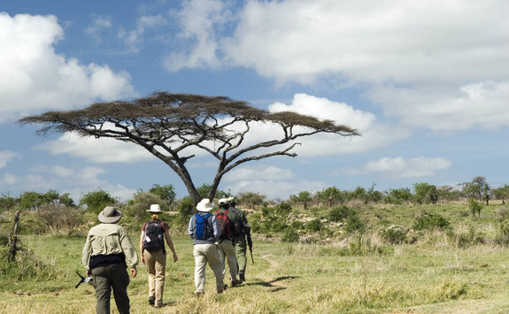 walking safari with guides