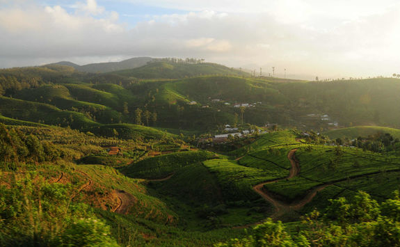 Tea hills in Sri Lanka