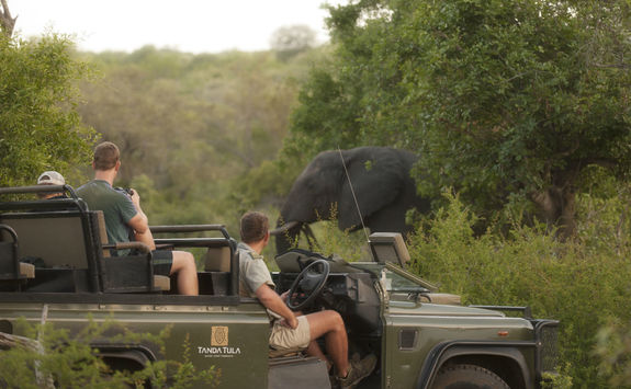 Spotting an elephant on a game drive
