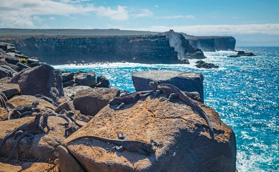 Punta Suarez cliffs