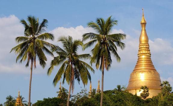 Palm trees at the Shwedagon Pagoda