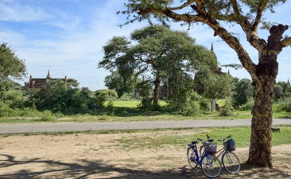 Bike against a tree in Bagan