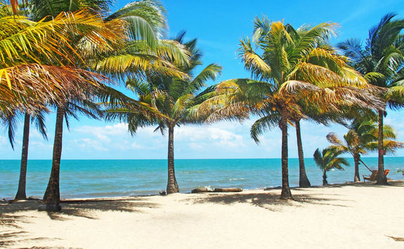 Palm trees on a beach in Belize