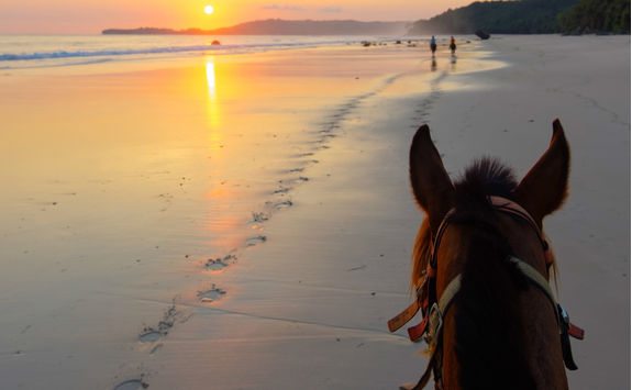 Horseriding on a beach at sunset