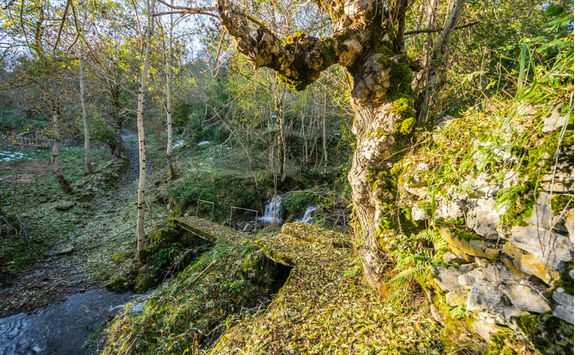 Picos de Europa trail