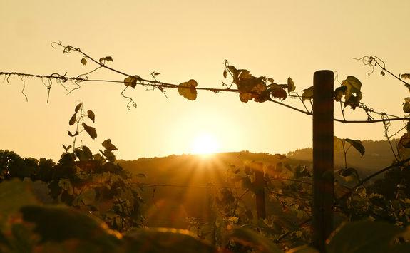 Douro sunset