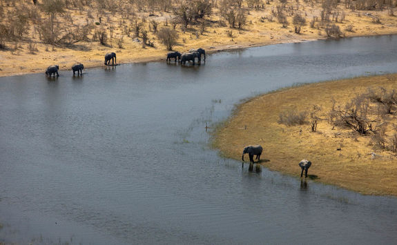 Selinda spillway elephants