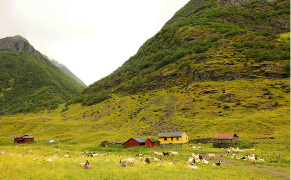 Goat farm in Norway