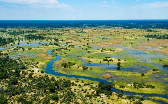 okavango birdseye
