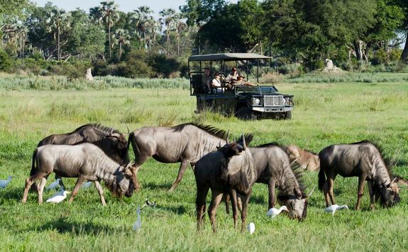 Chitabe jeep and buffalos