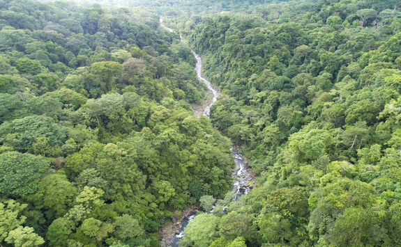 rainforest with river