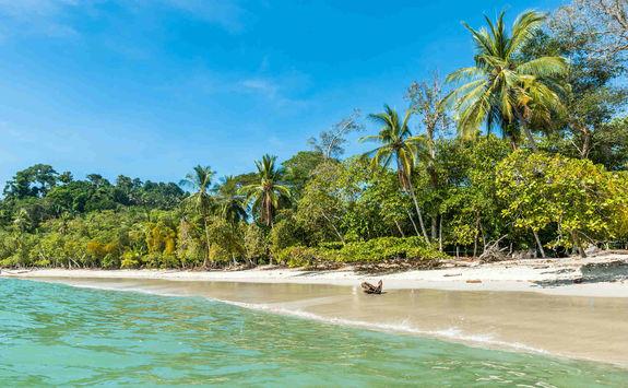 jungle fringed beach