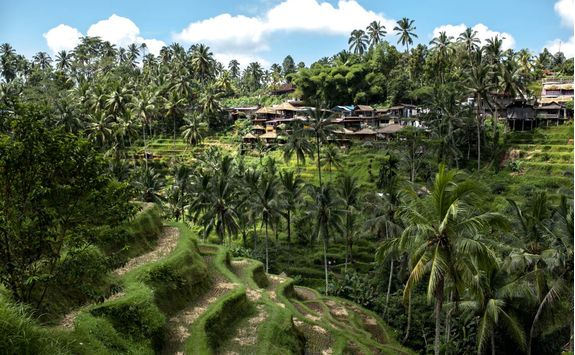 rice terraces ubud village