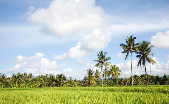medewi west bali landscape