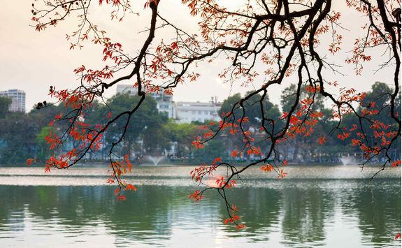 Tree in bud at Hoan Kiem lake in Hanoi