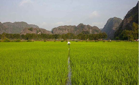 Farmer working at the paddy field