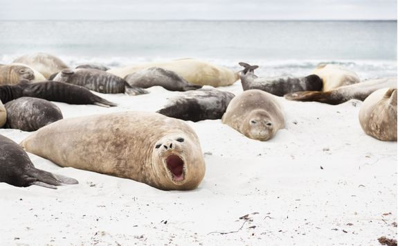 elephant seals on snow