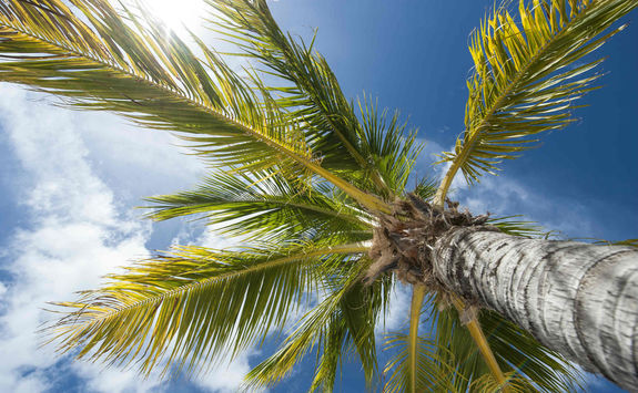 Palm tree looking up