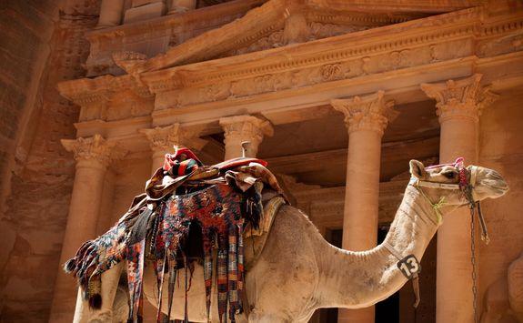 camel against treasury
