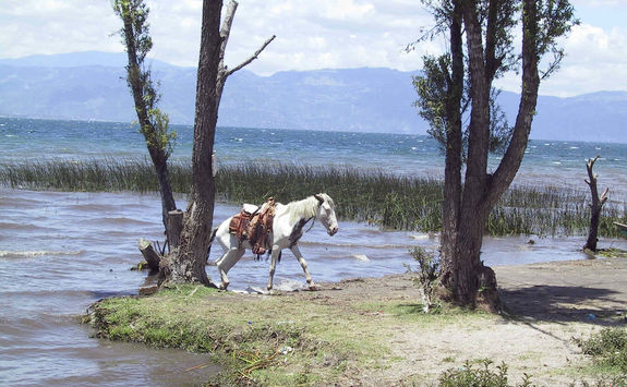 horse next to the lake