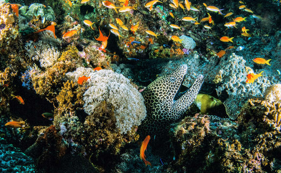 Marine life in Mozambique