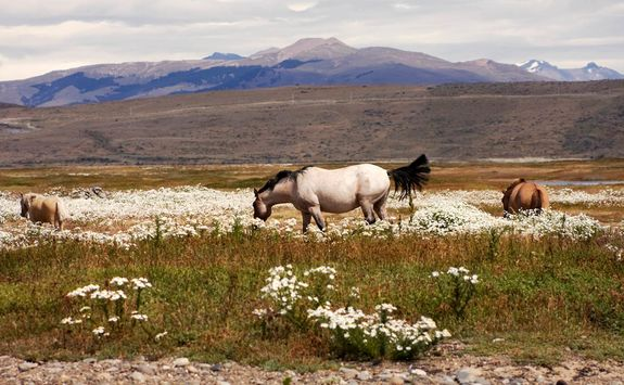 horses eating in meadow