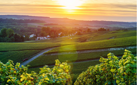 Champagne vineyards at sunset