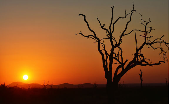 Sunset in Madikwe
