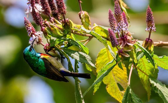 Akagera National Park bird