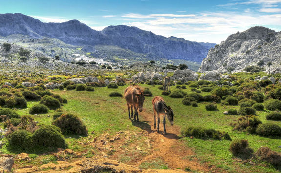 Horses walking in mountains