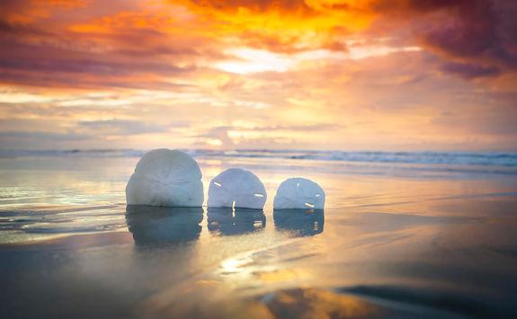 Shells on Myrtle beach