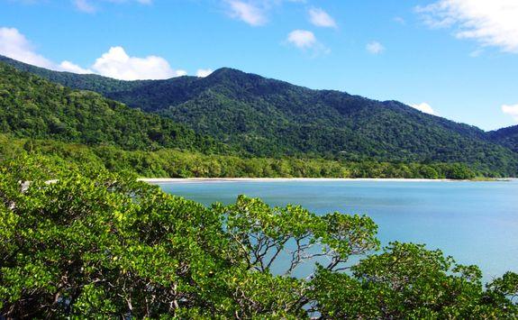 Rainforest and beach