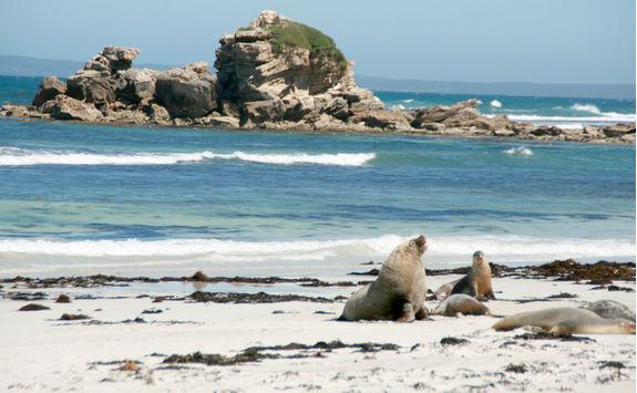 Seal's Bay