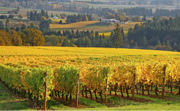 Willamette Valley in Oregon