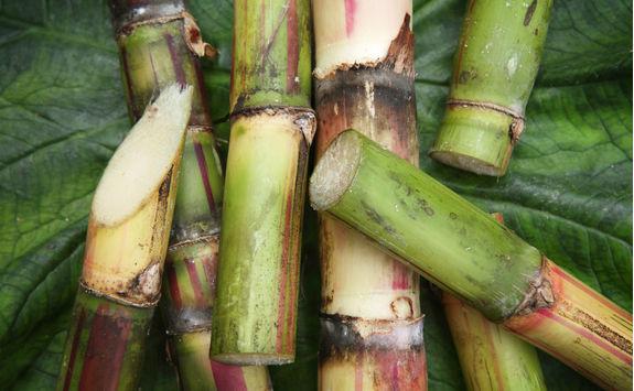 Sugar Cane Up Close