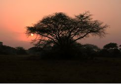 Sunset in Phinda