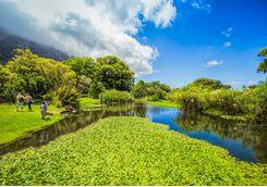 Cape Town's Botanical Gardens
