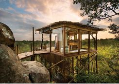 Treehouse in the bush