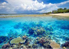 Gili coral reef