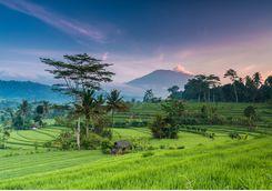 bali rice terrace field
