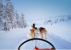 Enjoy a ride pulled by huskies