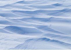 Explore the ice fields