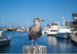 Seabird on Morro Bay