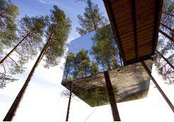 The Tree Hotel