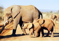 Elephants, South Africa