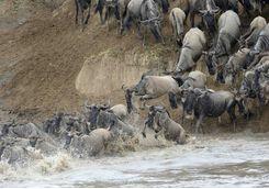 serenget wildebeest migration