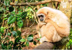 A monkey in a tree in Plettenberg